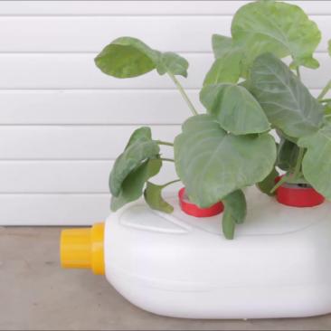 Hidroponik Botol Sabun